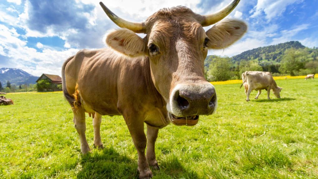 What (k) unlucky – disruption to Google's fiber was caused by grazing animals