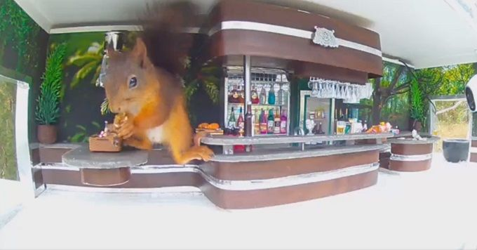 The squirrel bar allows you to study hungry animals up close